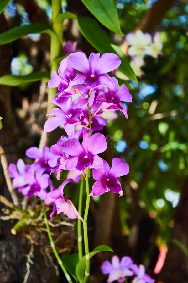 Flor violeta das orquídeas fotos de stock