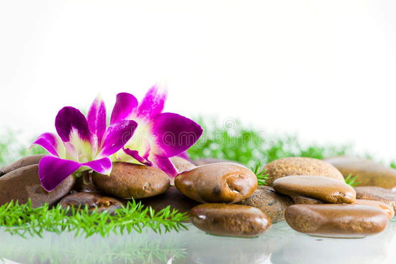 Flor violeta de la orquídea fotos de archivo