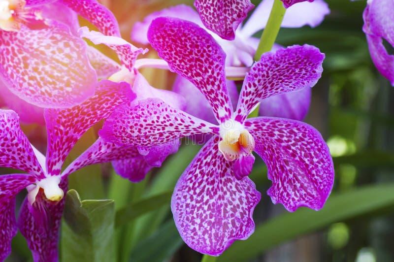Flor violeta de la orquídea fotos de archivo libres de regalías
