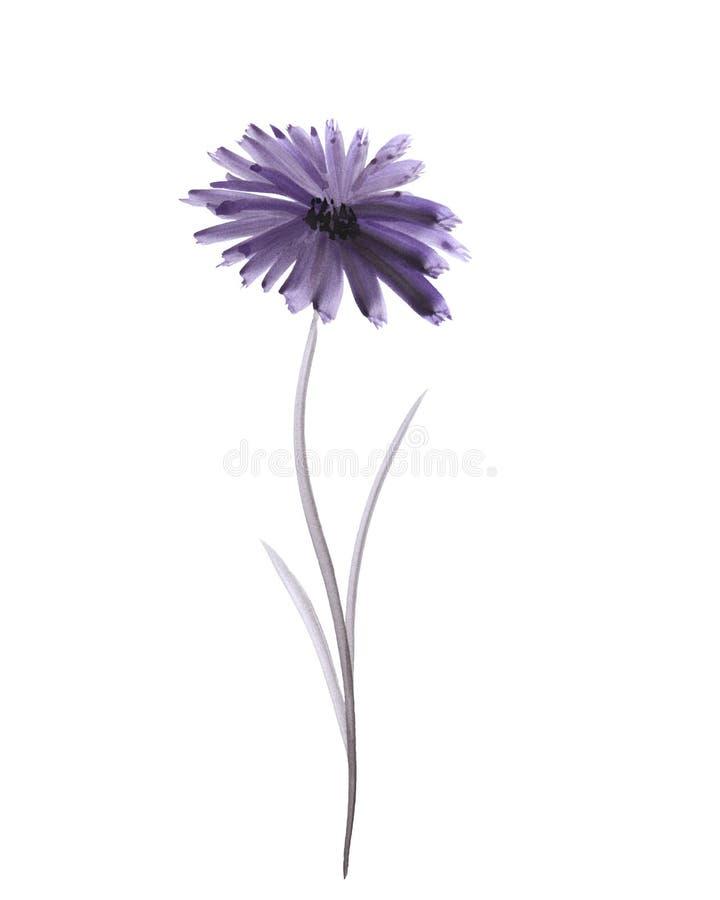 Flor violeta del gerber de la acuarela en un fondo blanco libre illustration