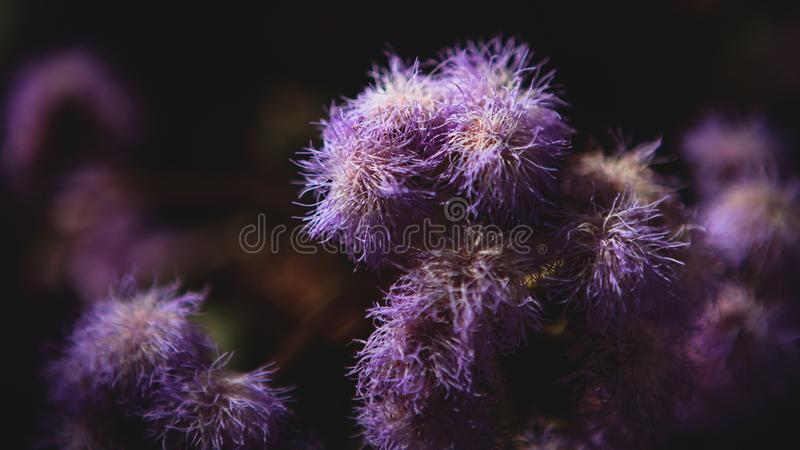 Flor violeta do jardim imagem de stock royalty free