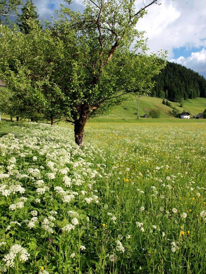 Flor y árbol foto de archivo