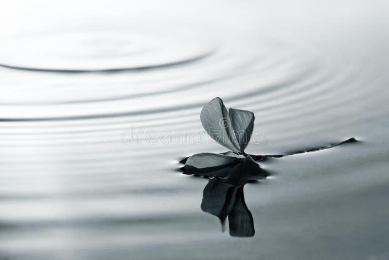 Flor y agua fotos de archivo libres de regalías