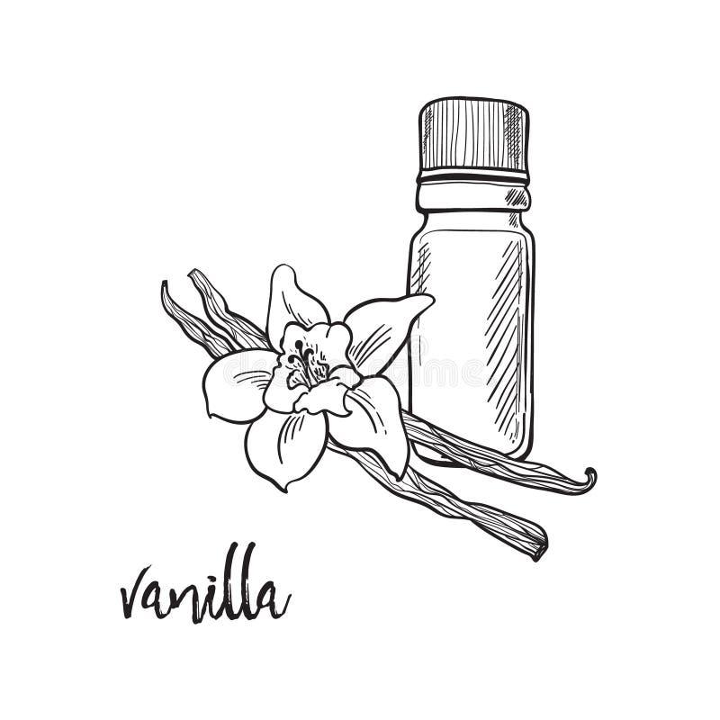Flor y bootle de la vainilla picantes stock de ilustración