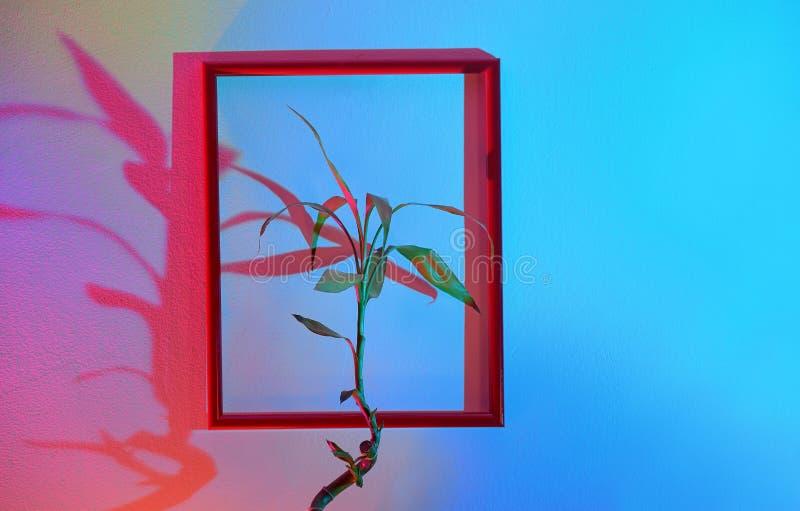 Flor y ejecución del marco en una pared fotografía de archivo libre de regalías