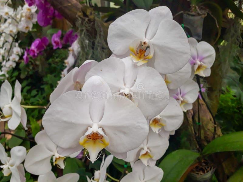 Flor y girasol imagen de archivo