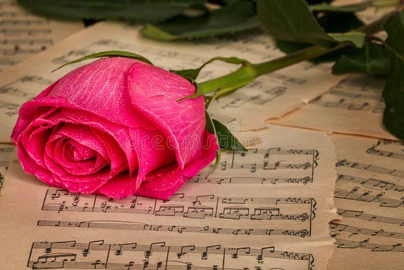 Flor Y Hoja Color De Rosa De Las Notas De La Música Imagen de ...