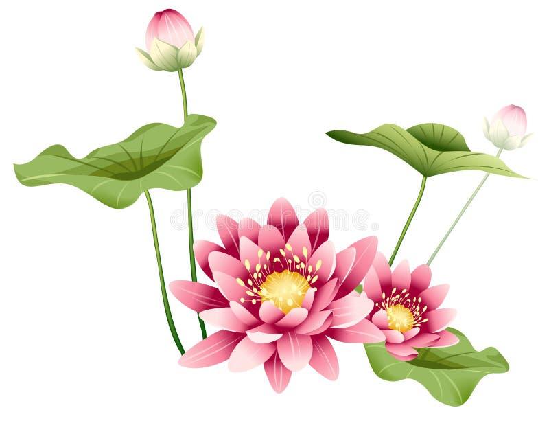 Flor y hojas de loto stock de ilustración