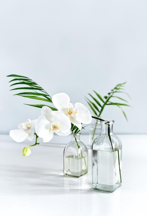 Flor y hojas de palma blancas de la orquídea en floreros en la sobremesa fotografía de archivo