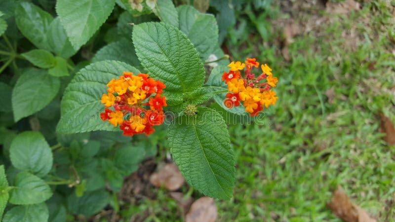 Flor y hojas minúsculas amarillas y anaranjadas fotografía de archivo libre de regalías