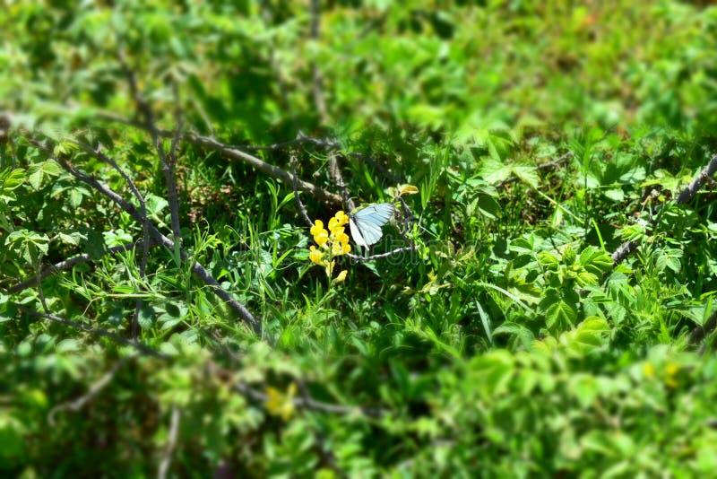 Flor y mariposa del verano fotografía de archivo