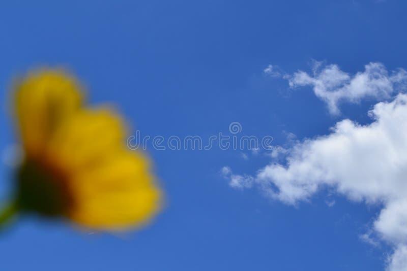 Flor y nubes fotografía de archivo