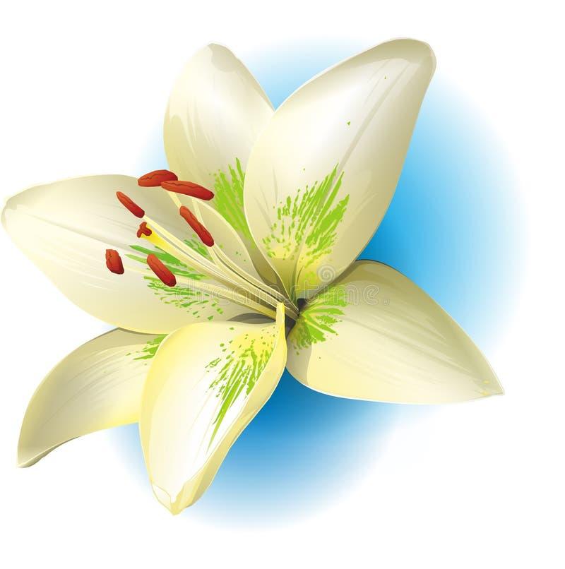 Flor y palillos realistas de la vainilla Orquídea stock de ilustración
