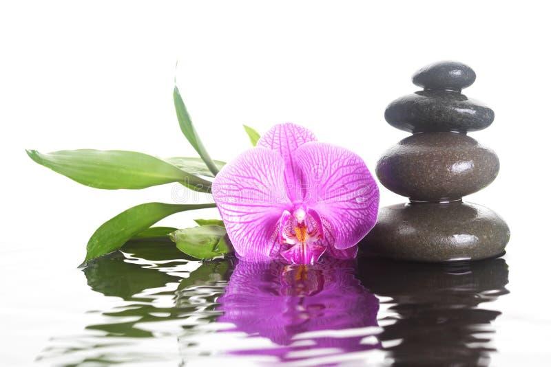 Flor y piedras en agua imagen de archivo