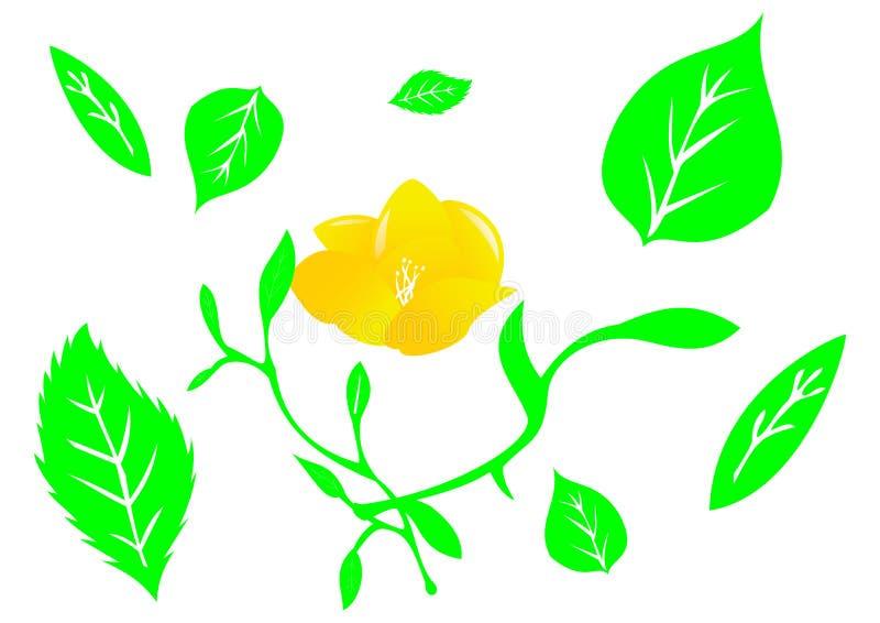 Flor y planta y manojo de hojas imagenes de archivo