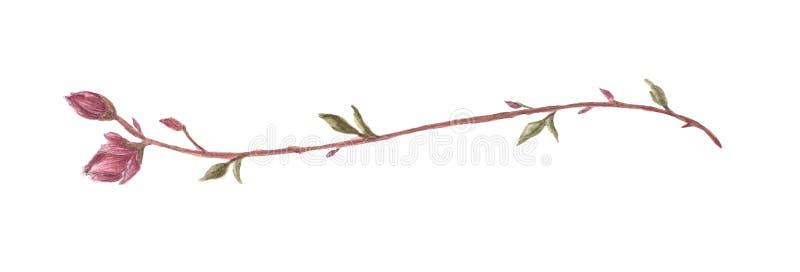 Flor y ramas de la magnolia L?nea fronteras, laureles y divisor del texto Ilustraci?n de la acuarela libre illustration