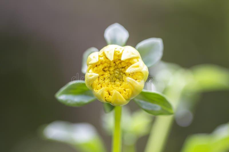 Flor y sol hermosa de la mañana fotos de archivo