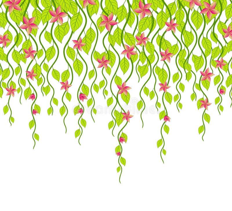 Flor y vides ilustración del vector
