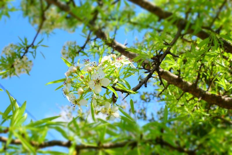 flora fotografia stock