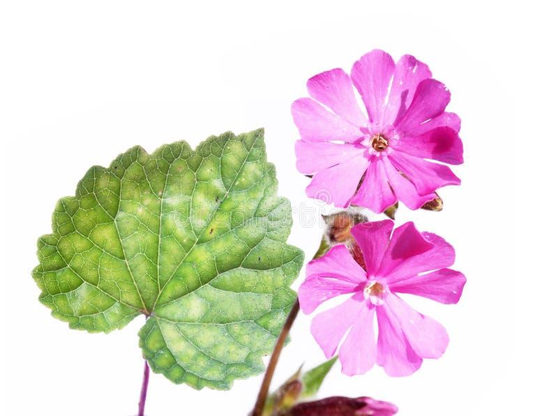 Flora Stock Photography