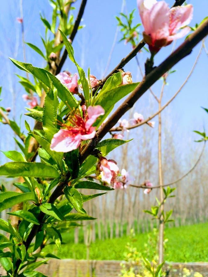 flora fotos de stock