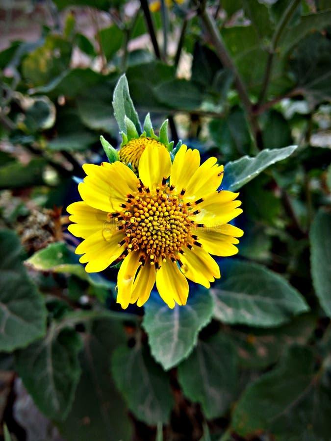 flora foto de archivo libre de regalías