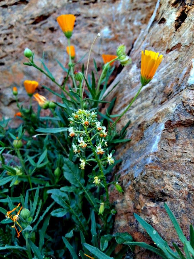 flora imagenes de archivo