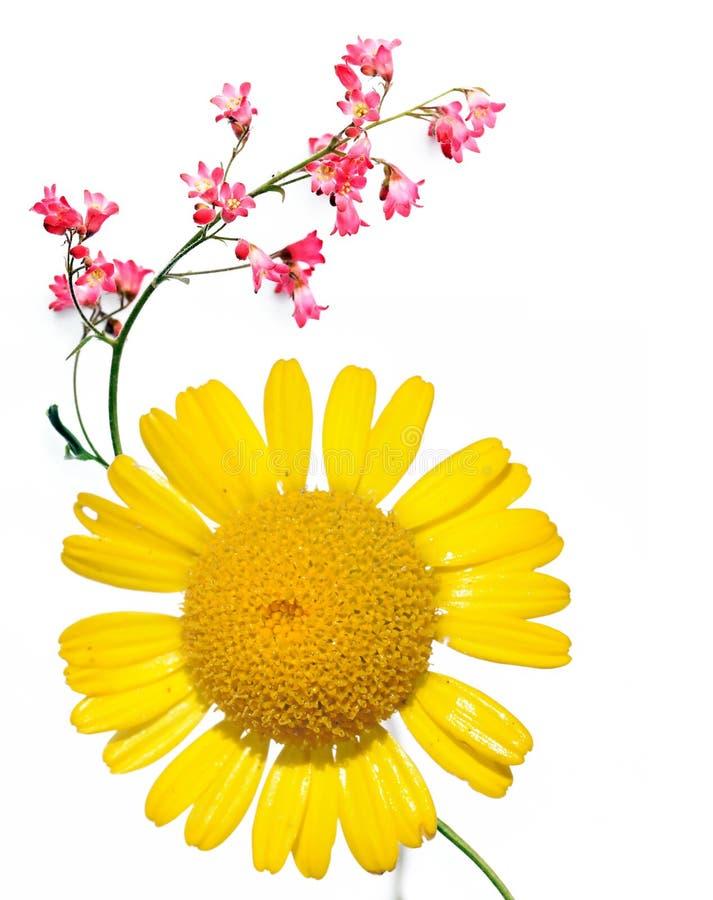 Flora royalty free stock photo