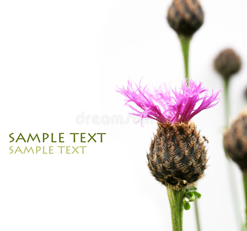 Flora royalty free stock photography