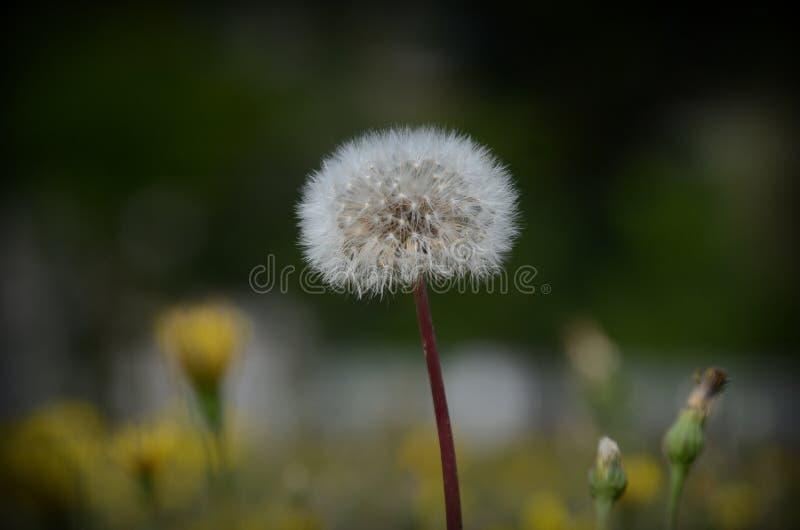 flora fotografie stock libere da diritti