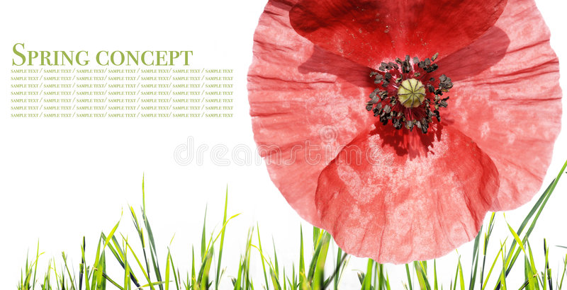 Flora against white background. Spring concept. flora against white background royalty free stock image