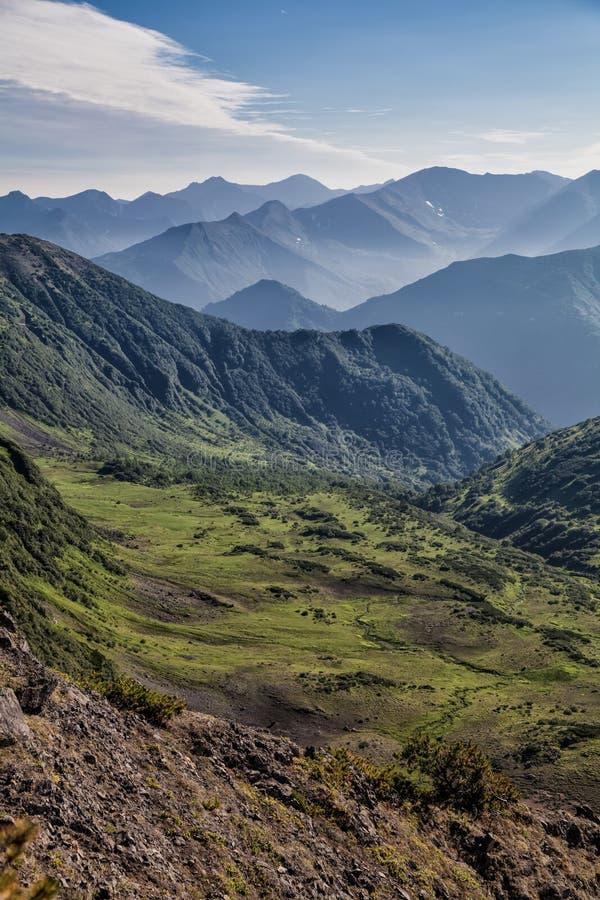 Flora av Kamchatka fields skogar Natur av Kamchatka LAN fotografering för bildbyråer