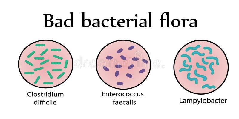 Flora bacteriana intestinal Malas bacterias stock de ilustración
