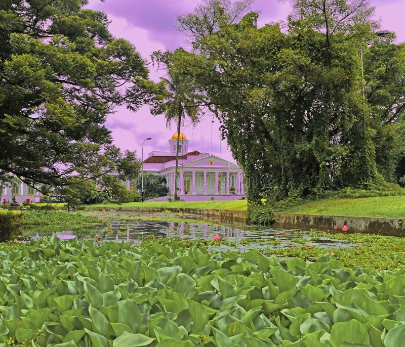 Flora bij het water royalty-vrije stock foto's