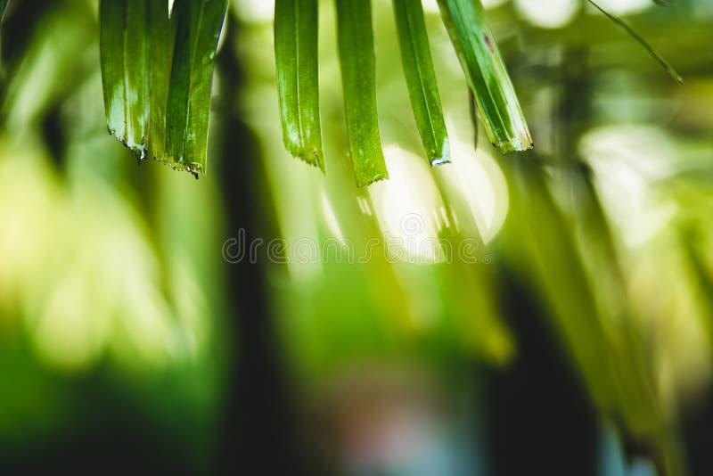 flora, boom, natuurlijk blad, kleur, groen rood, bloem, bloemen, aard, achtergrond, tuin, schoonheid, mooie installatie, royalty-vrije stock afbeeldingen