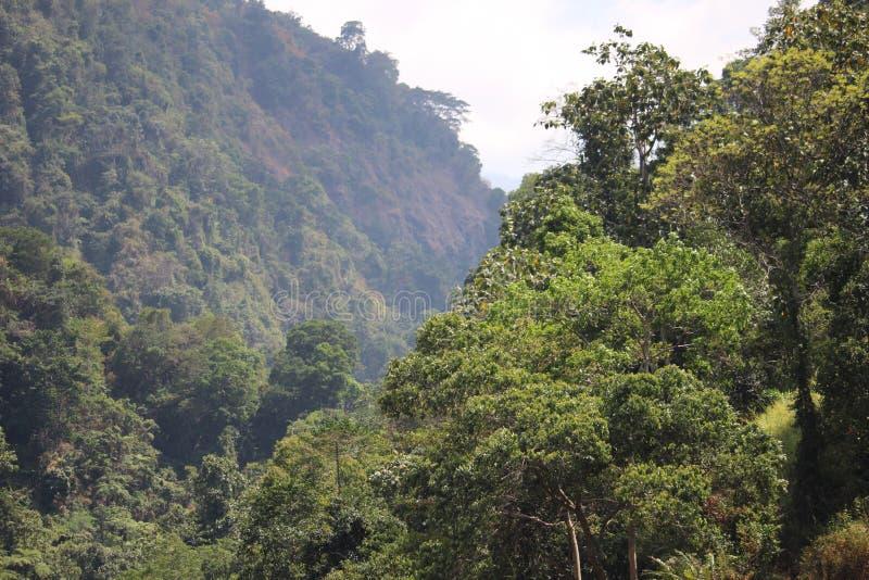Flora in Bromo Tengger Semeru National Park royalty free stock images