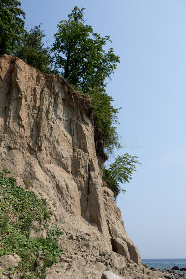 Flora on Cliff. royalty free stock photo