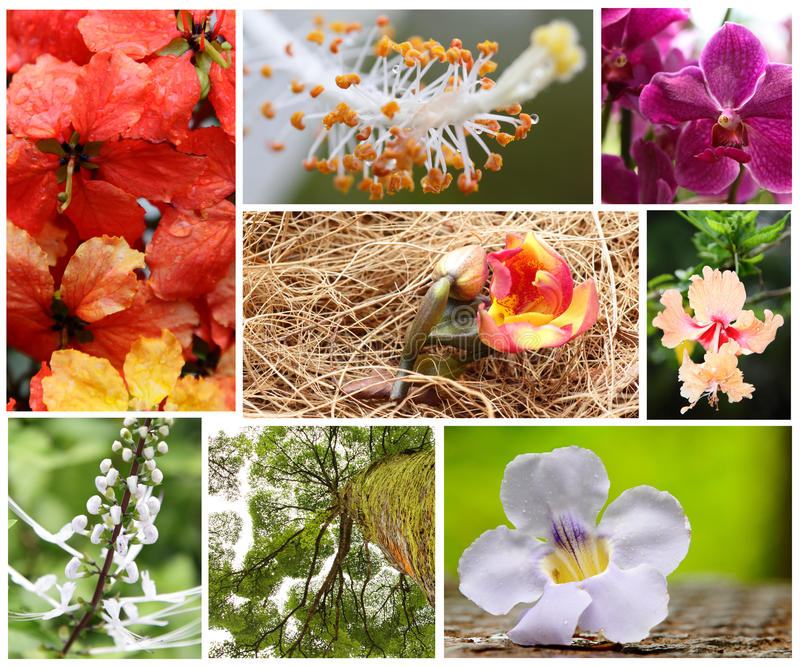 Download Flora Collage stock image. Image of tree, spring, colorful - 19185171