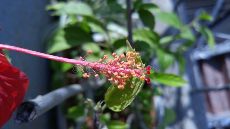 flora imagen de archivo libre de regalías