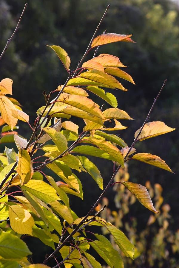 Flora colorida del otoño imagen de archivo libre de regalías
