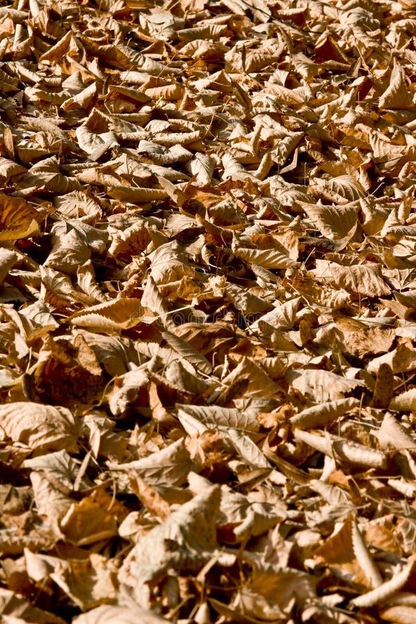 Flora colorida del otoño fotos de archivo libres de regalías