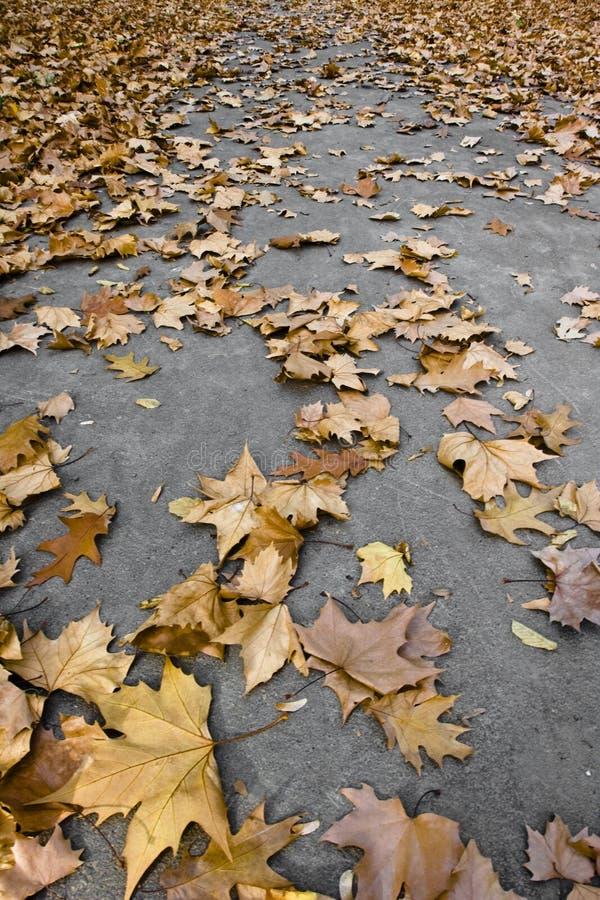Flora colorida del otoño fotografía de archivo
