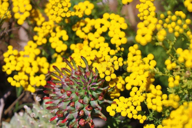 Flora de África do Sul fotos de stock