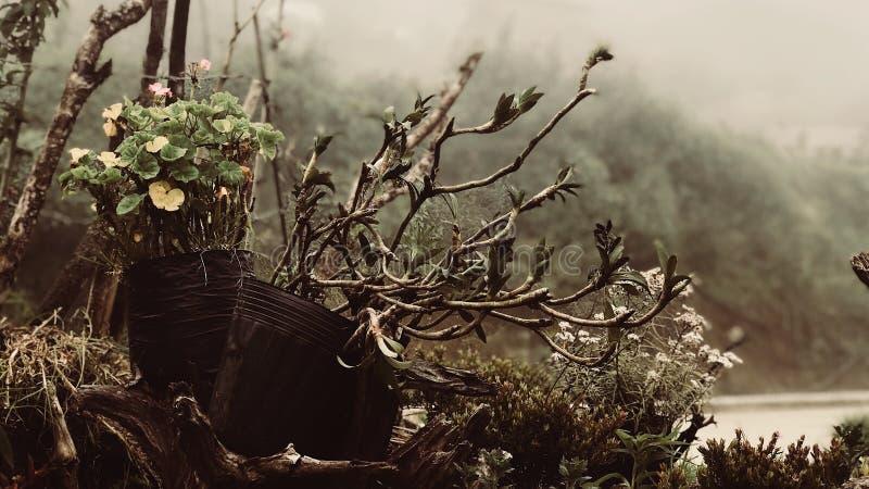 Flora de Ambangeg fotografering för bildbyråer