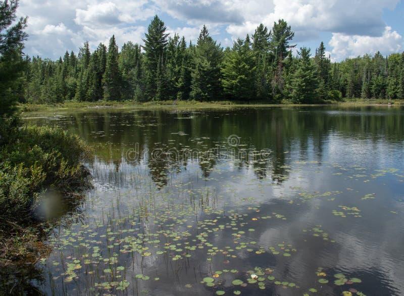 Flora de maio do lago peck no parque Canadá do Algonquin fotos de stock