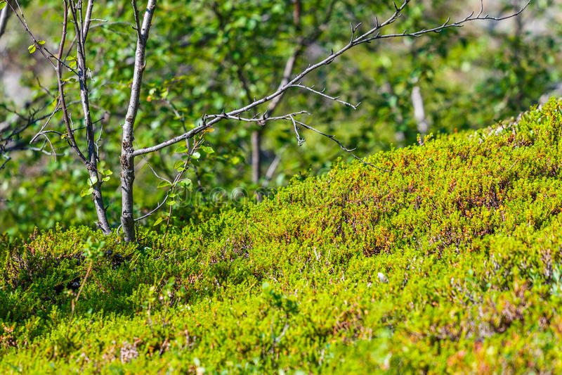 Flora de toundra photo stock