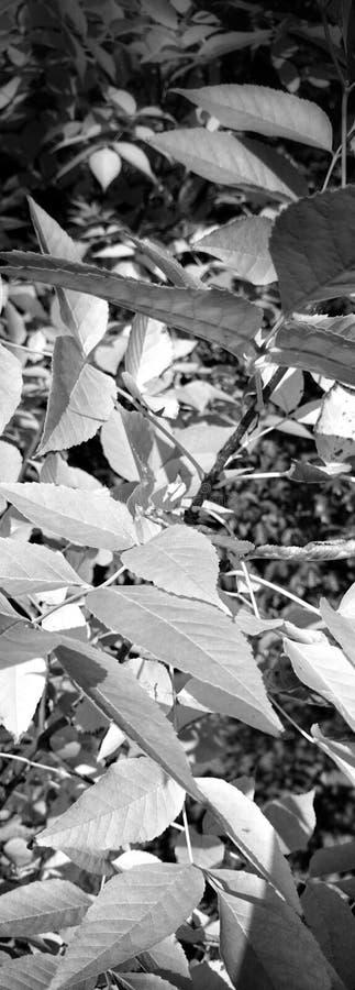 Flora del detalle en parque fotografía de archivo