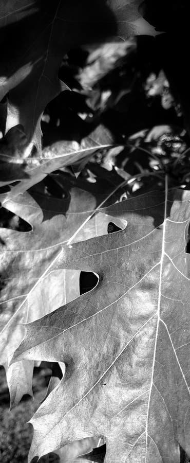Flora del detalle en parque fotografía de archivo libre de regalías