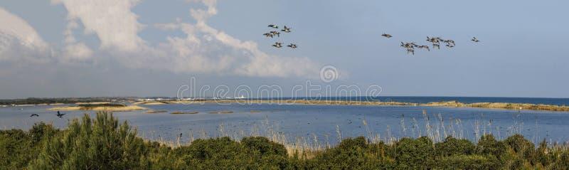 Flora e fauna all'oasi della sabbia fotografia stock