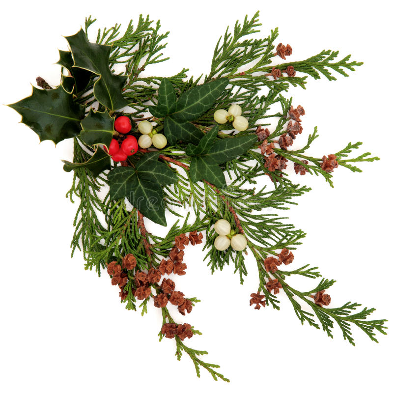 Flora E Fauna Do Inverno Imagens de Stock Royalty Free